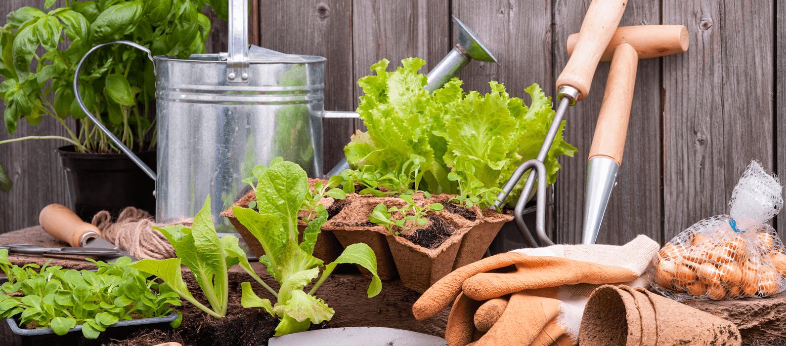 7 Gardening Tips that Work for Winnipeg Featured Image